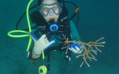 Restauro delle scogliere coralline, siglato l'accordo tra l'Università di Milano-Bicocca e il governo delle Maldive