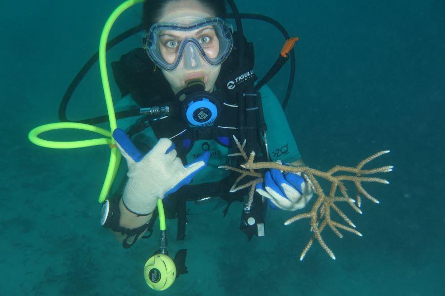 restauro scogliere coralline