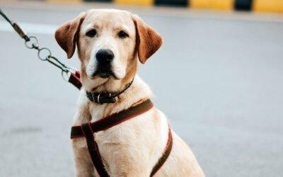 Cani e COVID-19, il cane ha un ruolo epidemiologico nella pandemia?