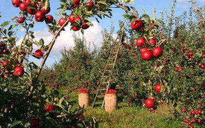 Lavoratori agricoli senza Green Pass, sono 100mila secondo Coldiretti