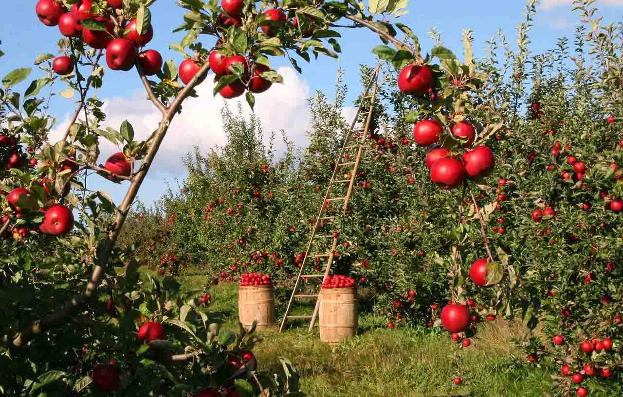 Lavoratori agricoli senza Green Pass