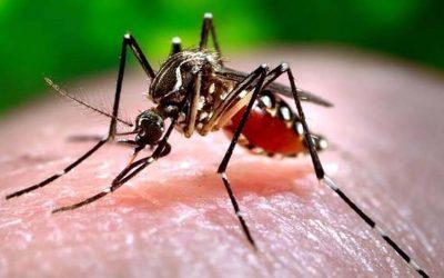 Zanzara coreana in Lombardia, resiste al freddo e si diffonde rapidamente