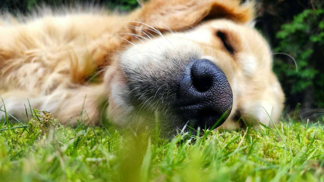 Quando il cane o il gatto mangia l'erba e vomita. Normalità o un sintomo di un disagio da approfondire?