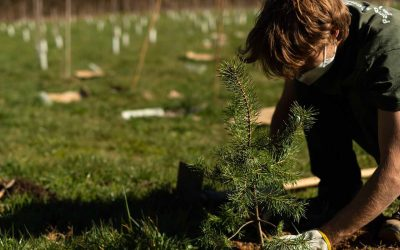 """Esselunga insieme a """"Forestami"""" per piantare 3 milioni di alberi entro il 2030"""