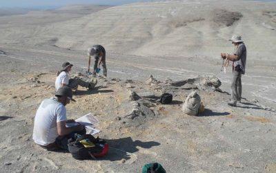 Perù, svelata l'origine di uno dei più grandi giacimenti fossili di cetacei al mondo