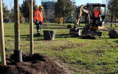 Giornata nazionale degli alberi. A Milano superati i 500.000 alberi