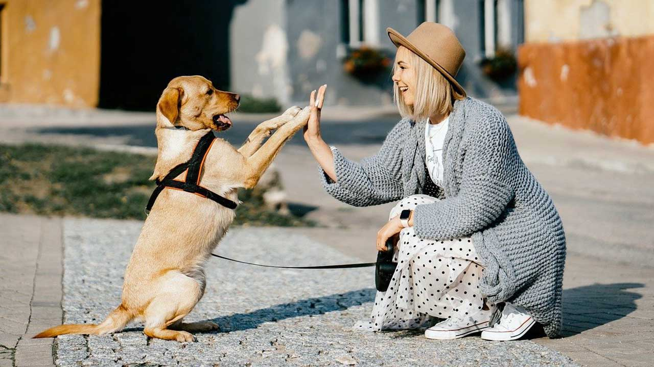 Idee imprenditoriali per animali. Eccone due davvero originali: Snack stellati e cani in prestito