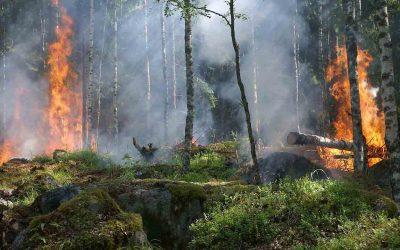 Incendi boschivi, le sostanze che inquinano il Mediterraneo