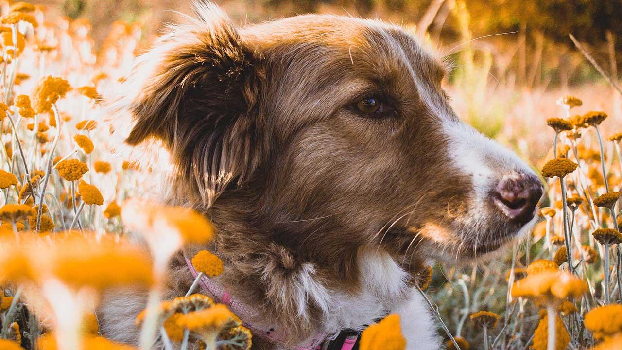 Il cane o gatto ha le pulci? Niente paura, ecco le cose importanti da sapere