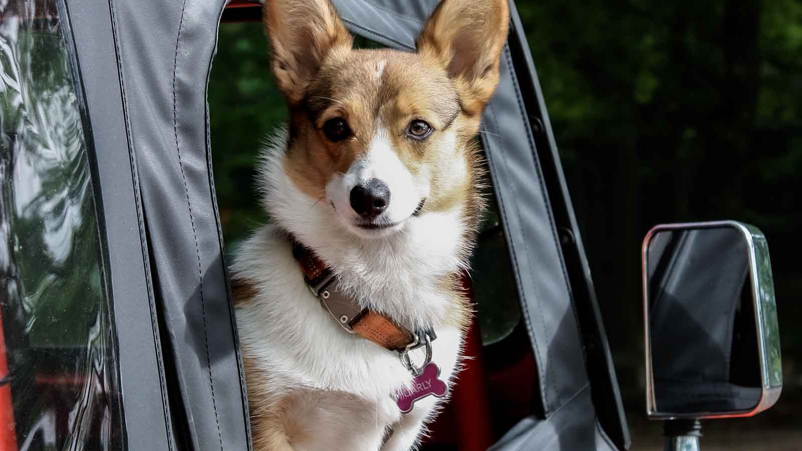 Viaggiare con il cane, ecco cosa bisogna sapere per una vacanza perfetta
